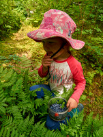 The blueberries are mediocre this year, but Aven is getting to be quite good picking them